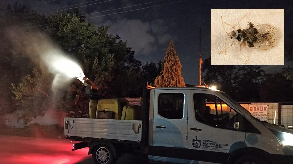 Böcek istilasına karşı Büyükşehir'den aralıksız ilaçlama