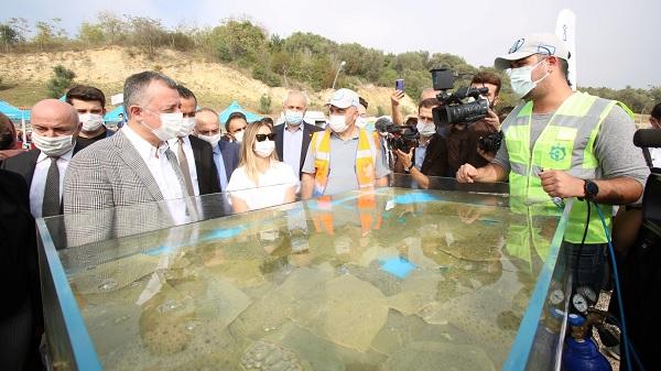 Darıca sahilinden Balıklar denize salındı